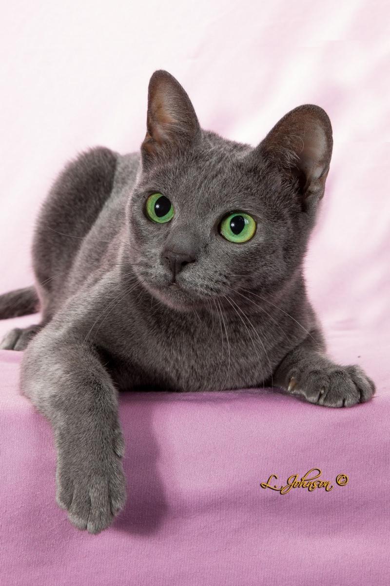 allergie aux poils de chats et de chiens symptomes solutions. Black Bedroom Furniture Sets. Home Design Ideas